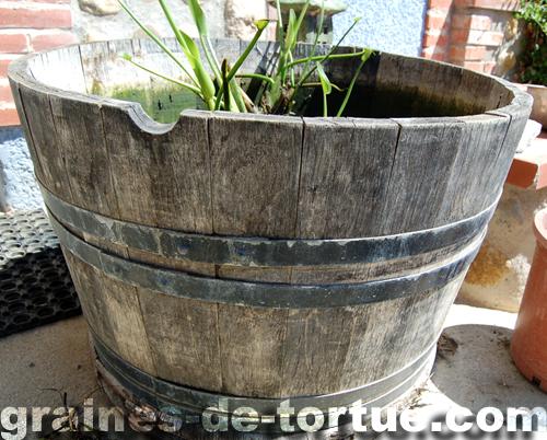 Un mini bassin pour une mini tortue d eau le blog de r ve de tortue - Bassin pour tortue aquatique villeurbanne ...