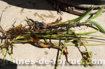 bassin_tonneau_plante